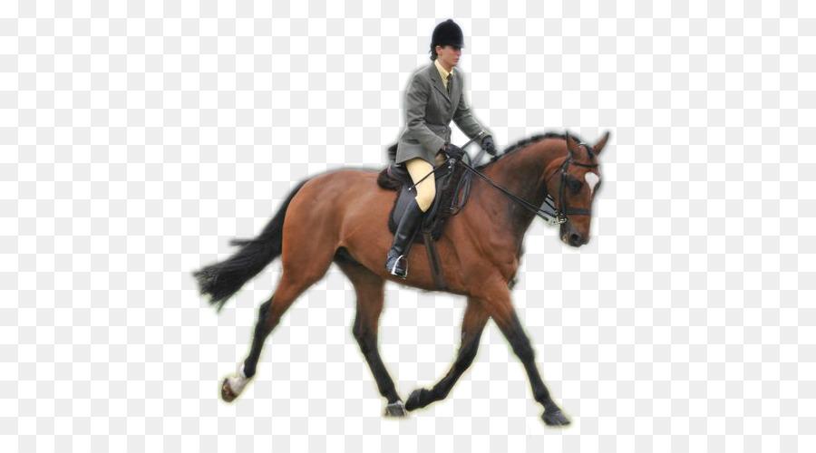 Amerikanisches Viertel Horse Reiter Zaum Appaloosa rein