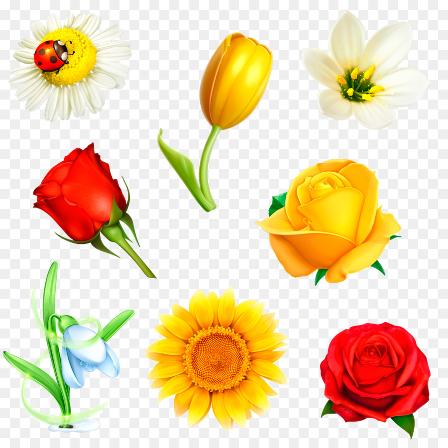 Flower Drawing Floral Design Crocus Png Download 15001484