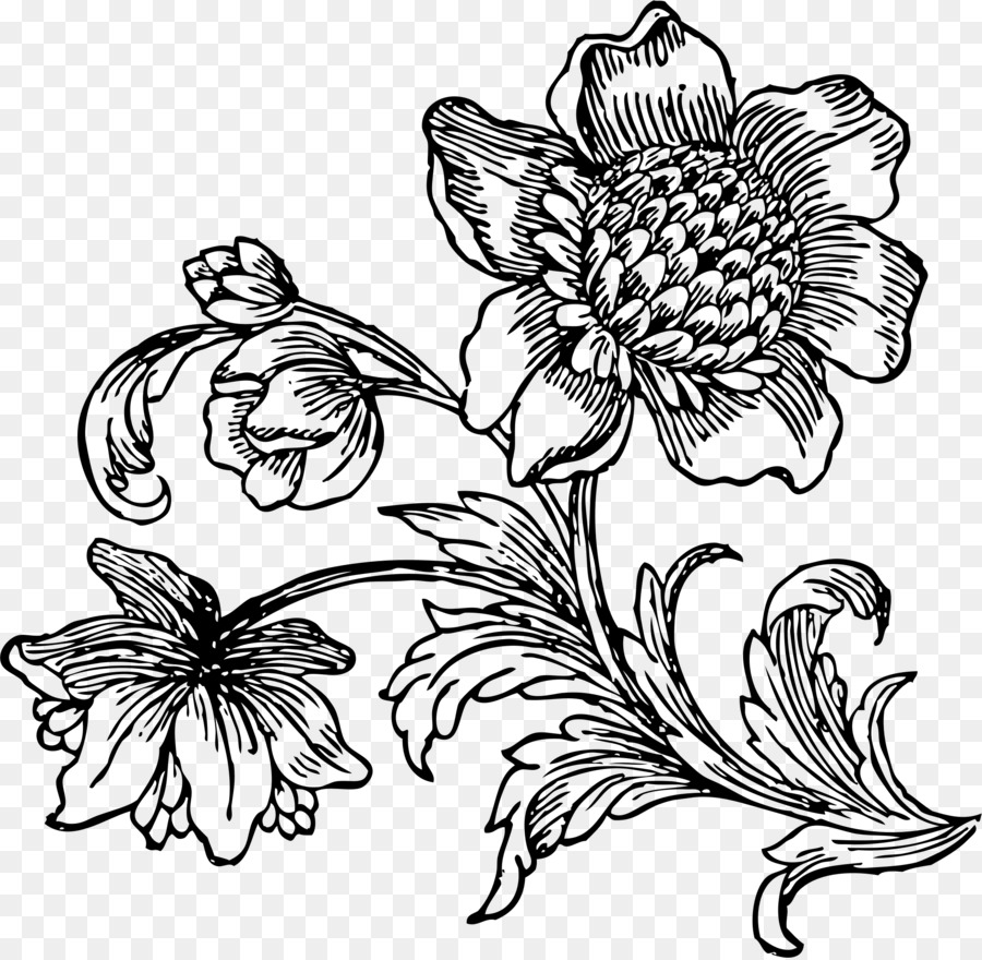 Flower drawing line art black and white clip art beet png download flower drawing line art black and white clip art beet mightylinksfo