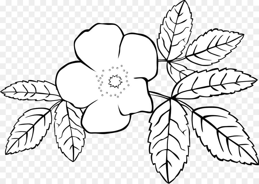 Libro para colorear de Flores Jasminum grandiflorum Jasminum ...