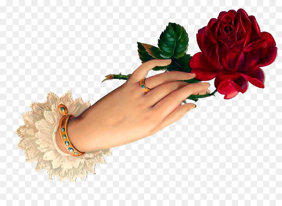 garden roses flower gift good evening png download 974 708