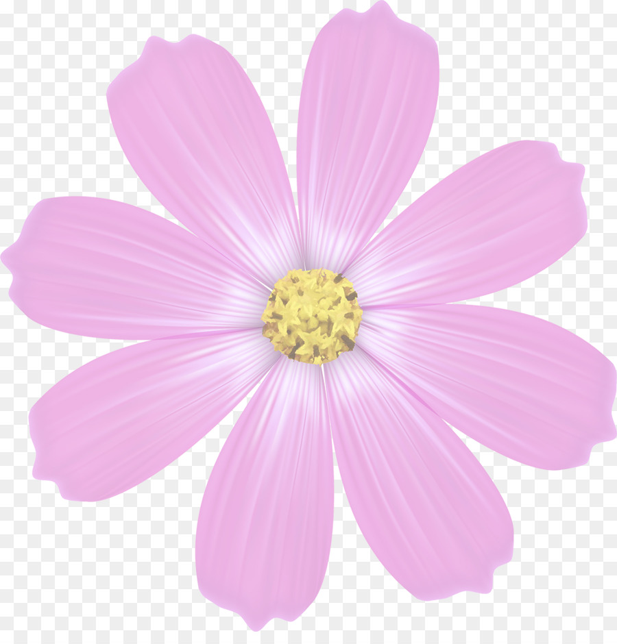 Daisy family annual plant flower herbaceous plant petal cosmos daisy family annual plant flower herbaceous plant petal cosmos flower mightylinksfo