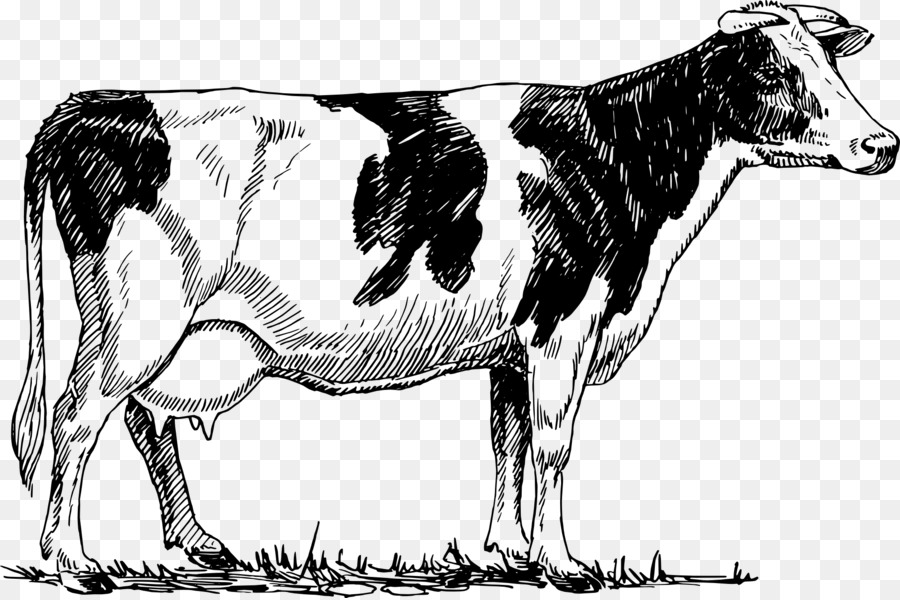 Holstein Friesian Cattle Drawing Paper Dairy