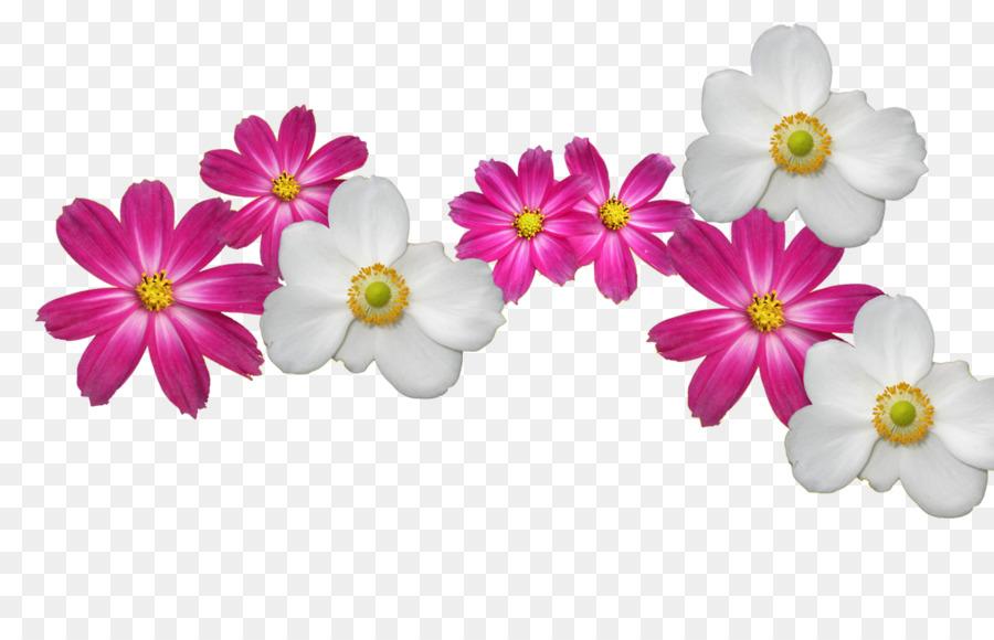 Desktop wallpaper flower wallpaper cosmos flower png download desktop wallpaper flower wallpaper cosmos flower mightylinksfo