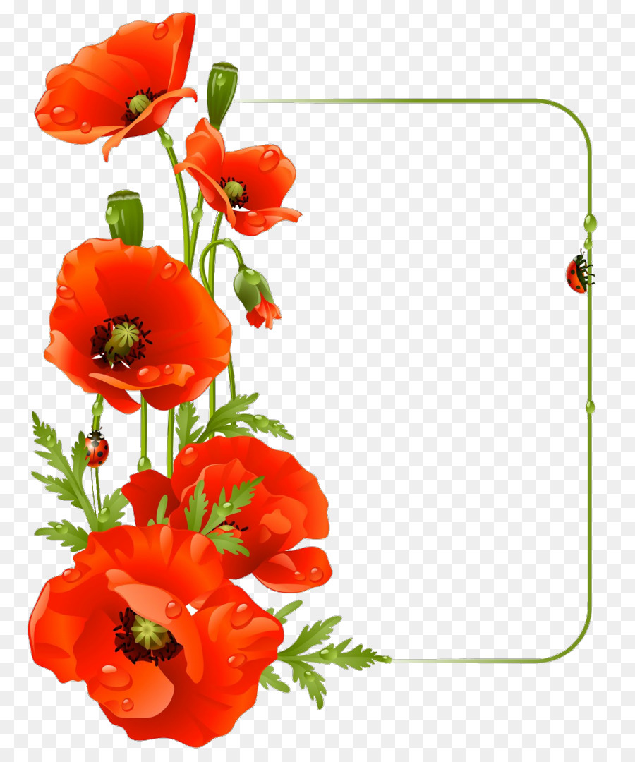 Common Poppy Flower Drawing Poppy Png Download 8721080 Free