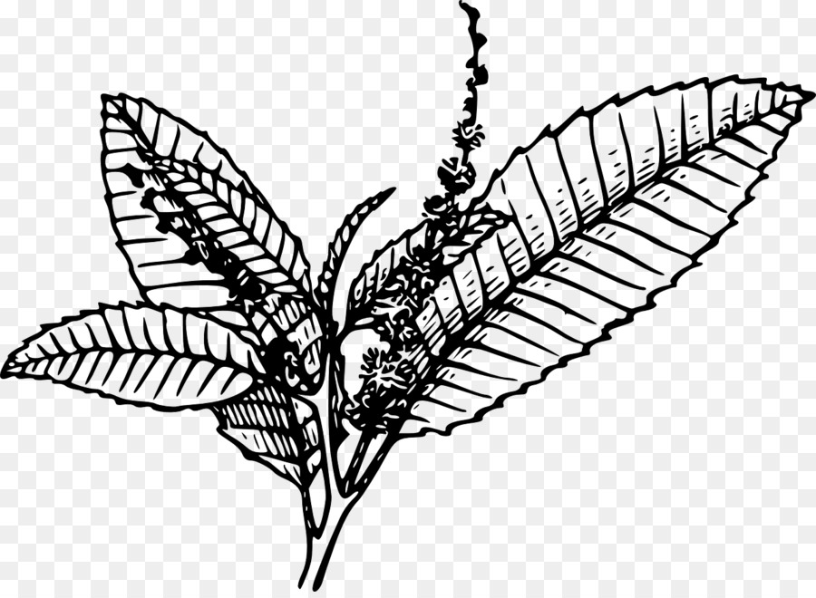 tobacco pipe tobacco plants clip art chestnut png download 1280 rh kisspng com tobacco cessation clip art tobacco plant clipart