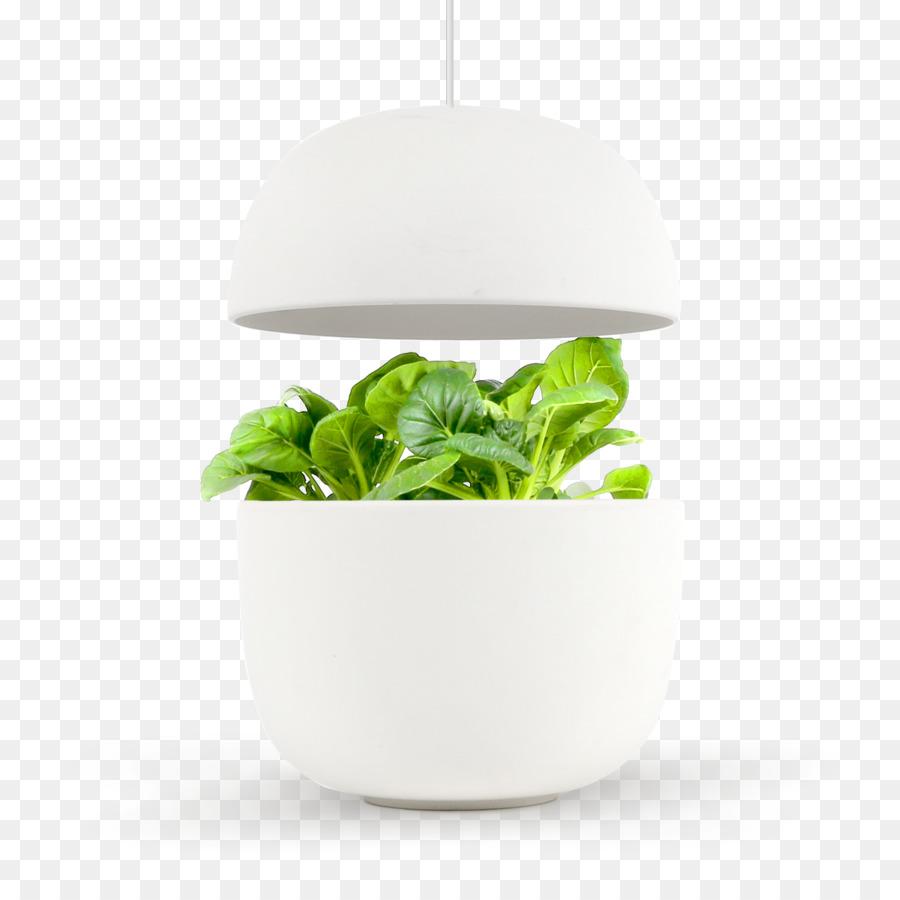 Gardening Bialy Vegetable Kitchen garden - oregano png download ...