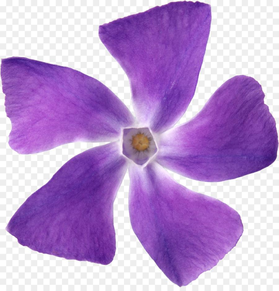 Purple flower petal violet lilac purple png download 10461080 purple flower petal violet lilac purple mightylinksfo