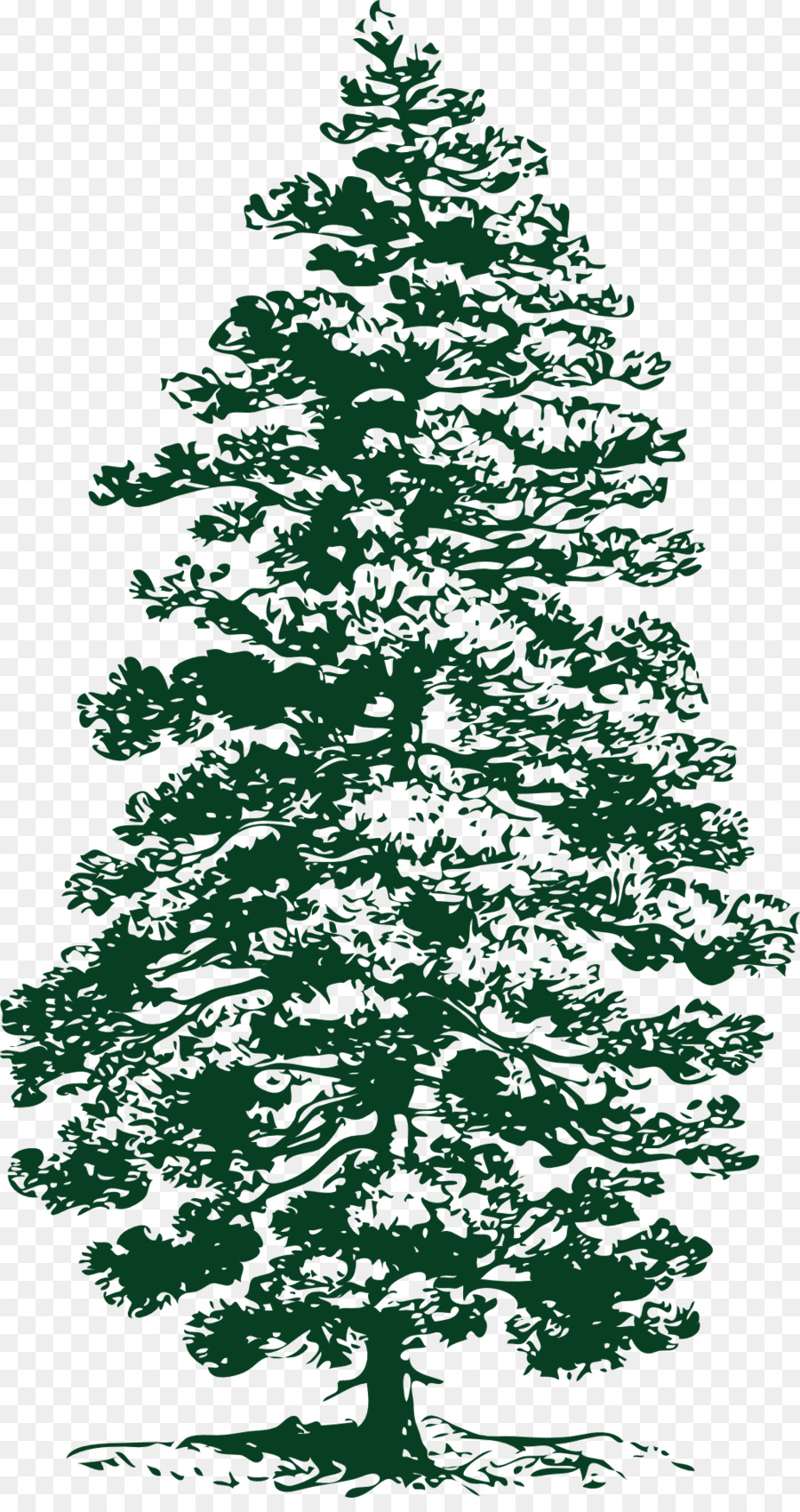 Eastern White Pine Tree Clip Art Pine Png Download 1026 1920