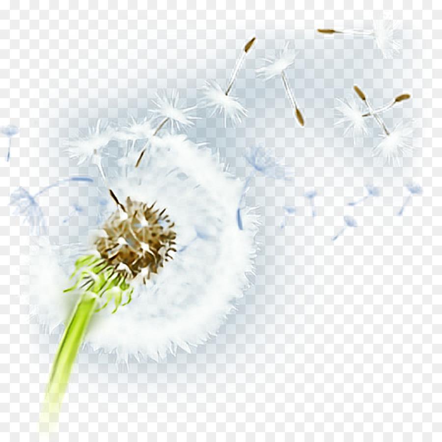 flower desktop wallpaper petal pollen plant - dandelion png download