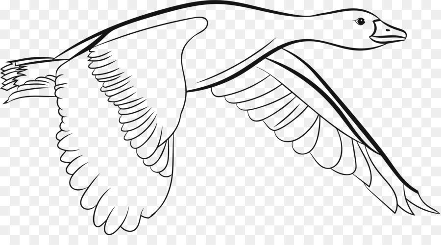 Ganso De Canadá Pájaro Del Búho Del Águila Calva - ave que vuela png ...