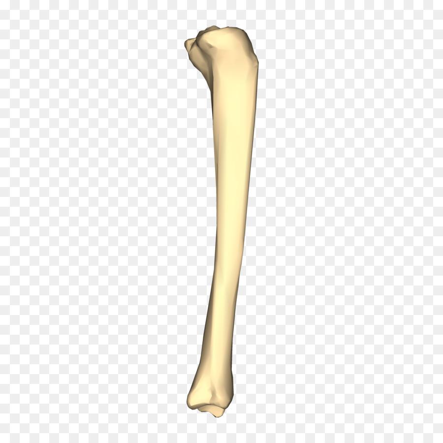 Tibia Bone Fibula Femur Crus Fracture View Png Download 4500