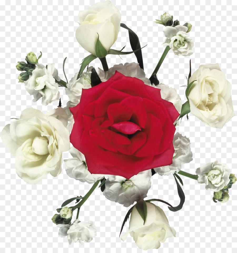 garten rosen schneiden, blumen centifolia rosen beach rose - weiße