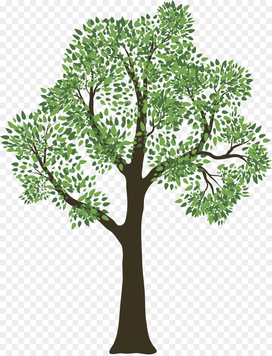 Family Tree Genealogy Child Spring Tree Png Download 22622954