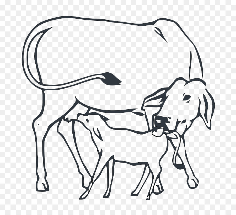 Cattle Cow Calf Operation India Drawing Cow