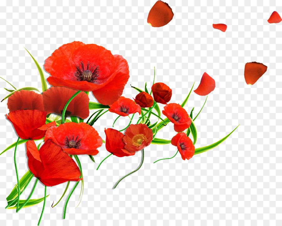 Common poppy flower remembrance poppy petal gerbera png download common poppy flower remembrance poppy petal gerbera mightylinksfo