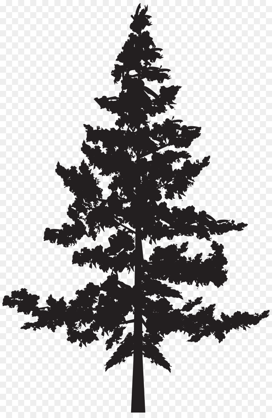 Western red-cedar Tree Evergreen Blue spruce - tree ...