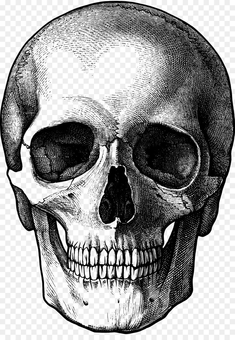 drawing skull fun stuff to draw art sketch skulls png download