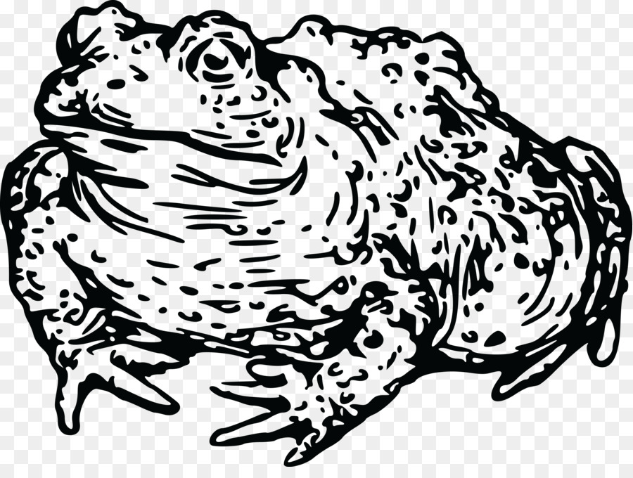 frog toad amphibian tadpole clip art amphibian png download 4000 rh kisspng com Frog Eggs Clip Art Tadpole with Front Legs