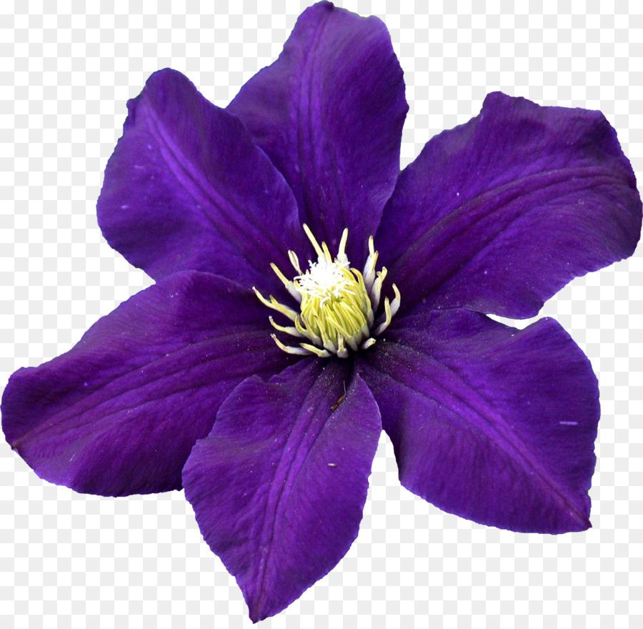 Leather Flower Seed Petal Sales Hibiscus Flower Png Download