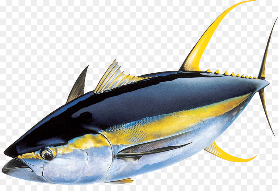 Yellowfin tuna Atlantic bluefin tuna Skipjack tuna Fishing ...