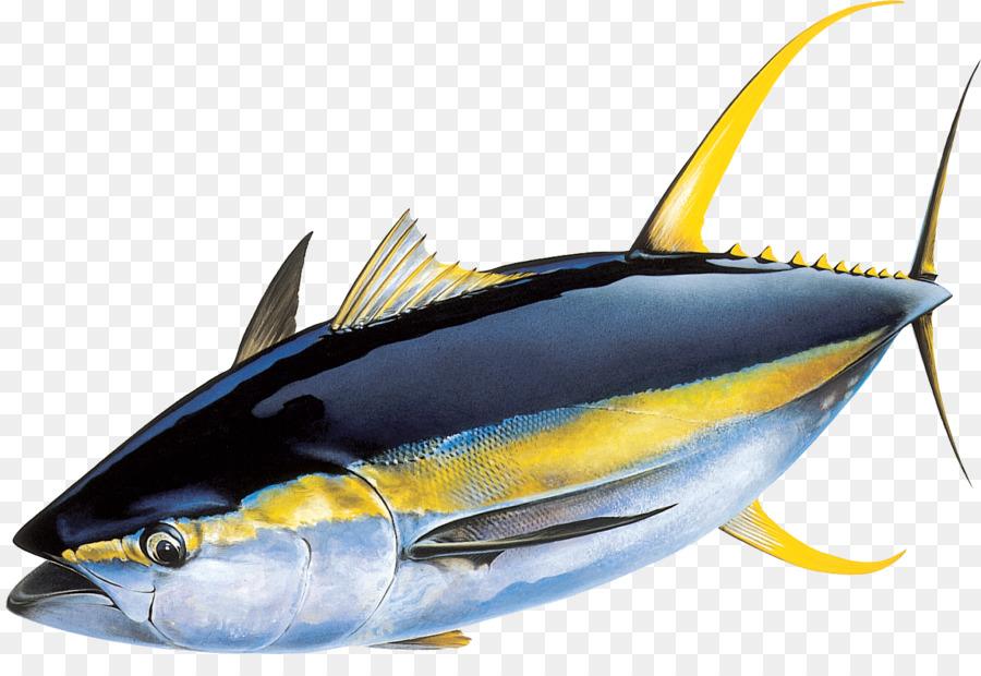 yellowfin tuna atlantic bluefin tuna skipjack tuna fishing fish