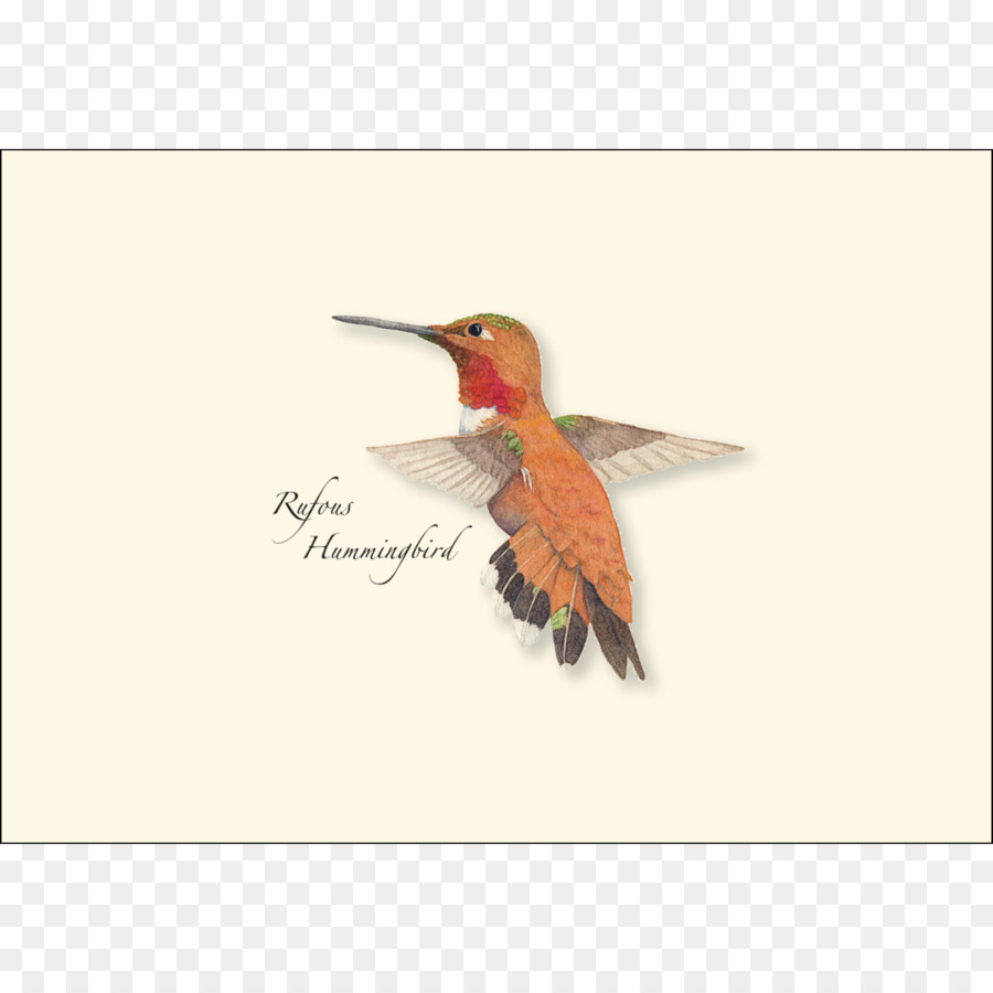 Earth sky water greeting note cards paper envelope bird earth sky water greeting note cards paper envelope bird hummingbird m4hsunfo