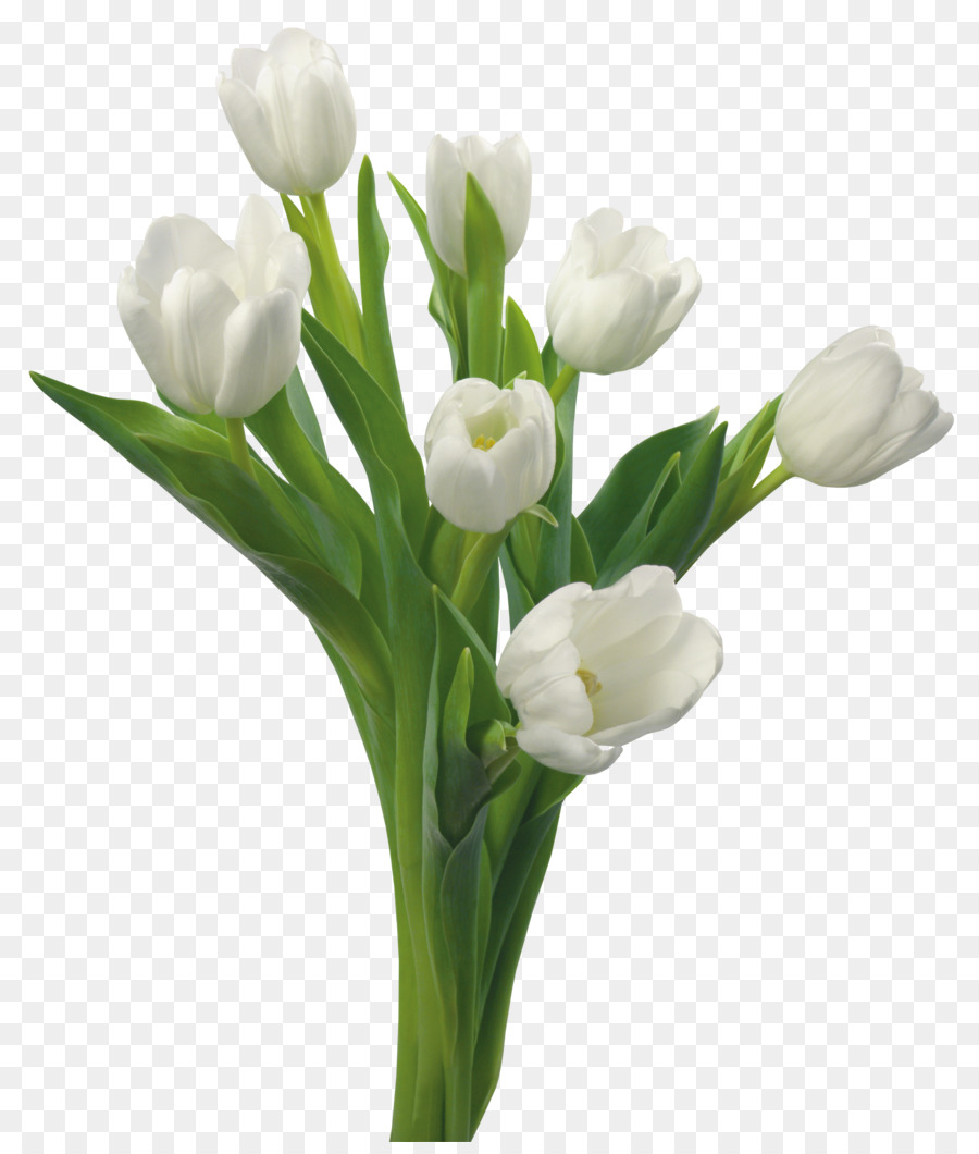Tulip Flower Bouquet White Blue Rose Tulip Png Download 3891