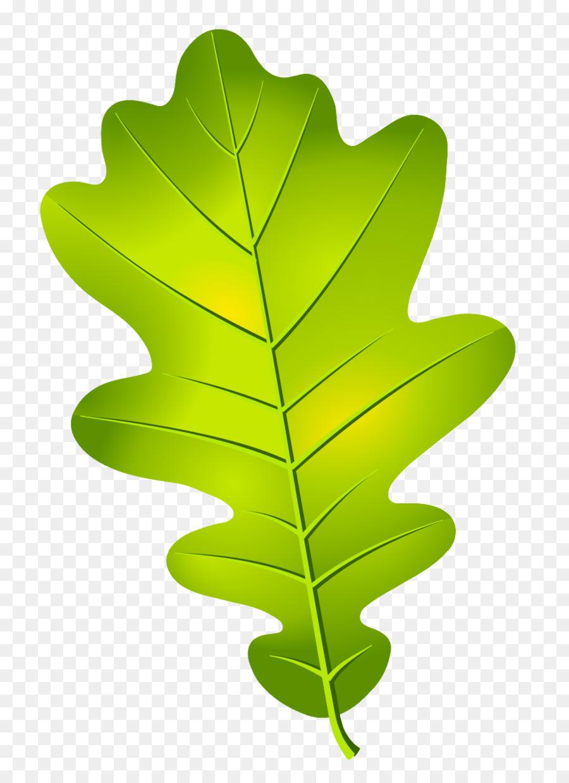 Oak leaf cluster Acorn - leaves vector png download - 970 ...