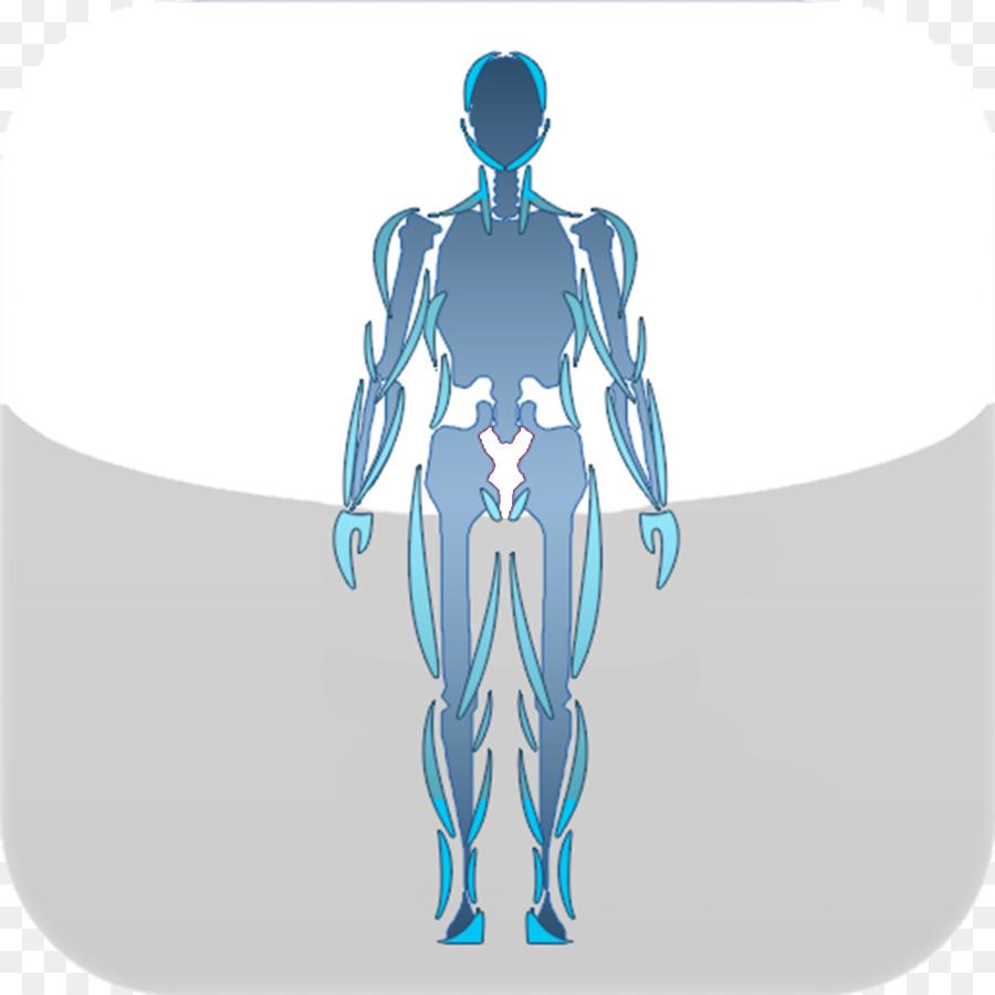 Brazo, cuerpo Humano, diseño Gráfico Articulación de la Cadera ...