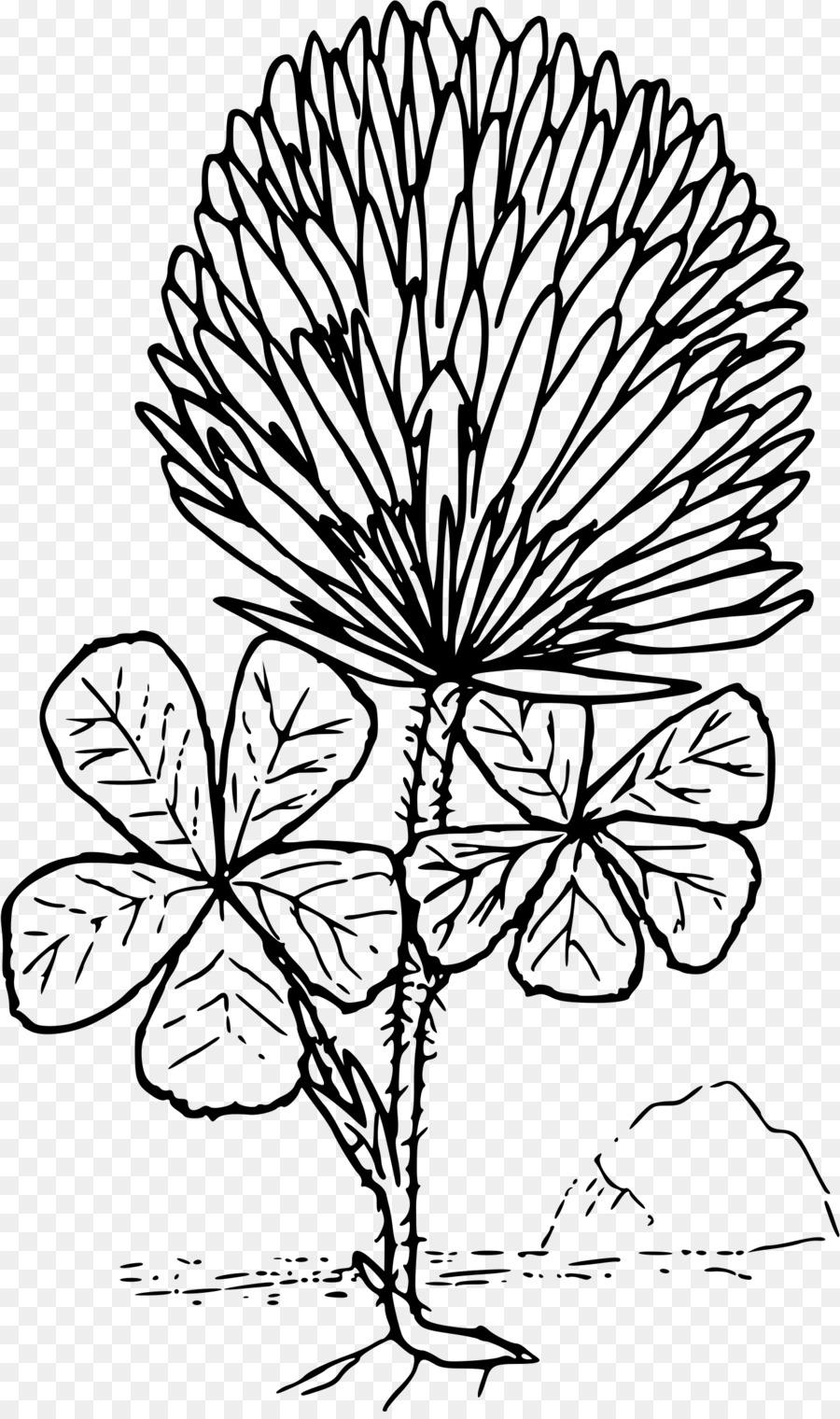 Libro para colorear de trébol de Cuatro hojas de Trébol Rojo Trébol ...
