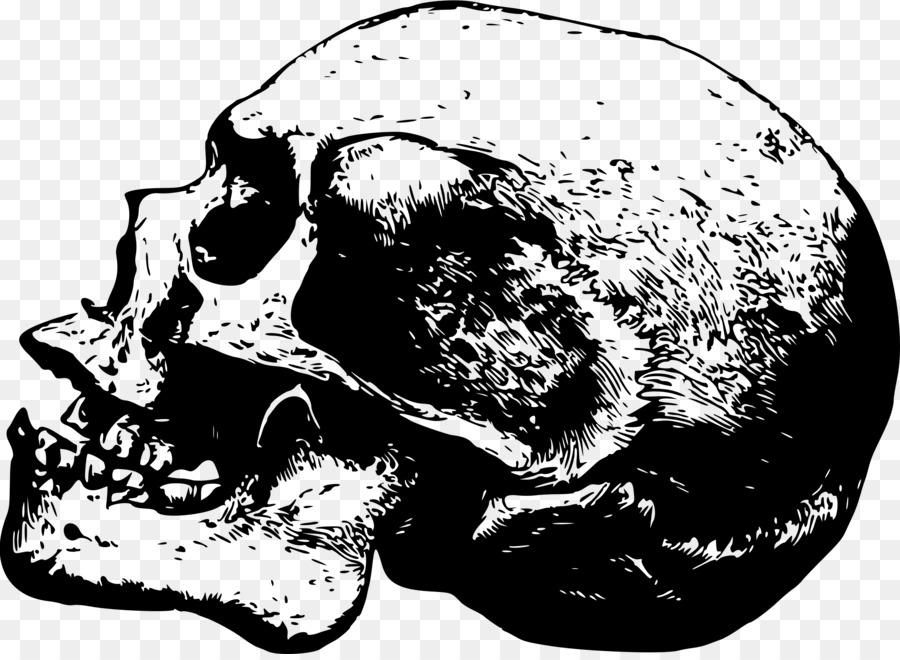 Skull Desktop Wallpaper Clip Art
