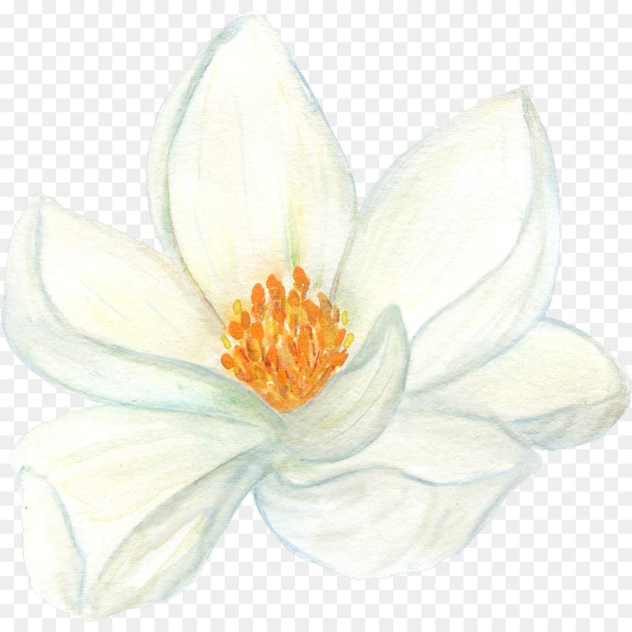 Perfume Essential Oil Aroma Compound Bergamot Orange Absolute