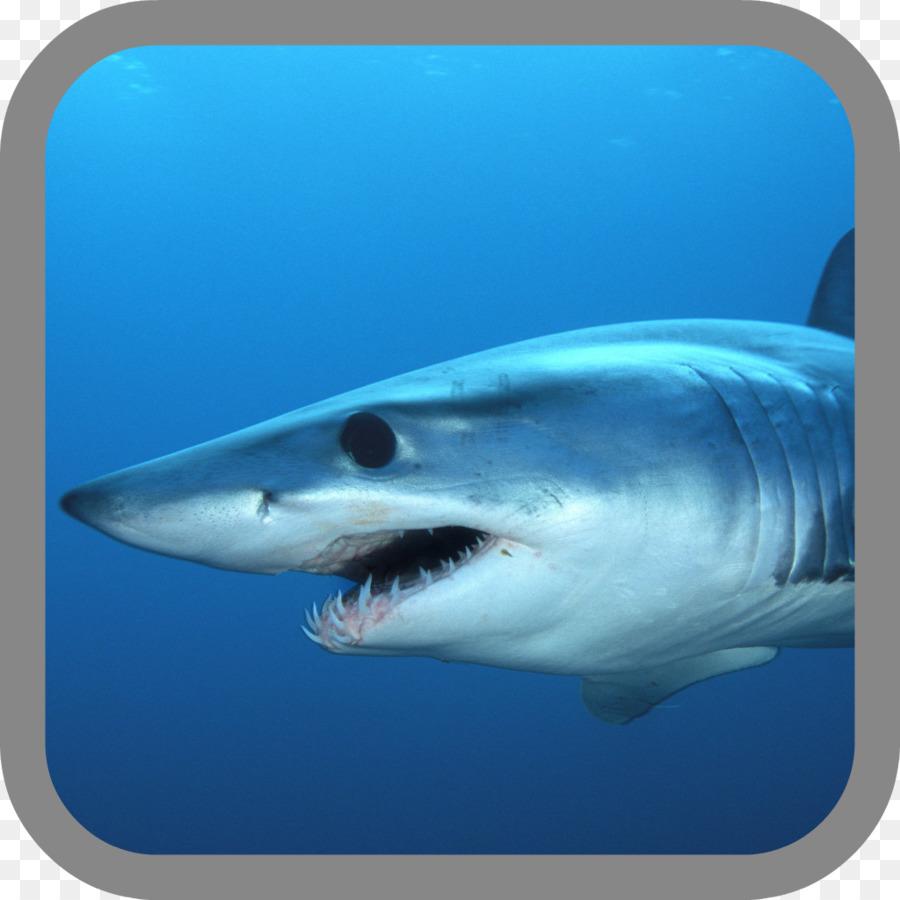 Hungry Shark Evolución Isurus oxyrinchus la Pesca de tiburón ...