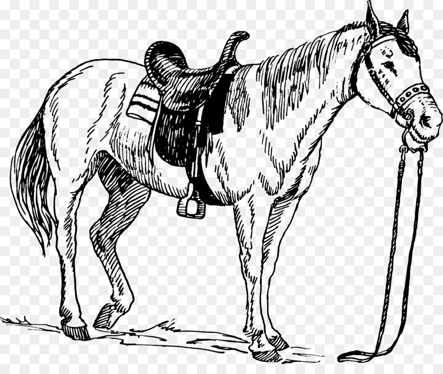 Horse Saddle Drawing Equestrian