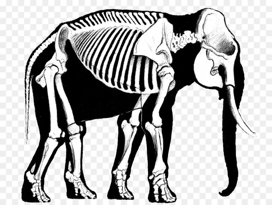 Elefante asiático elefante Africano, El arte del dibujo de animal ...