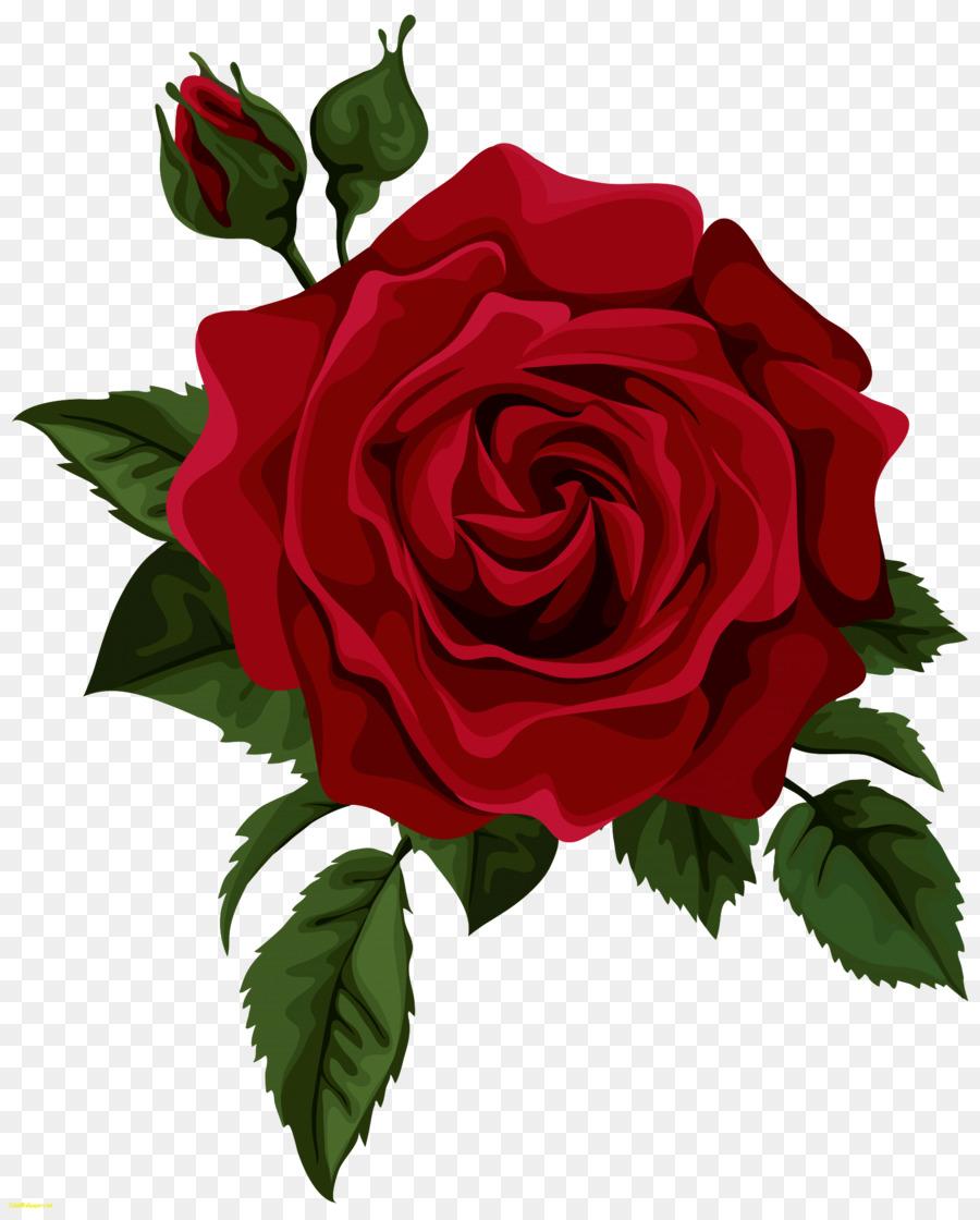 Tea Rose Clipart Black And White: Hybrid Tea Rose Red Clip Art