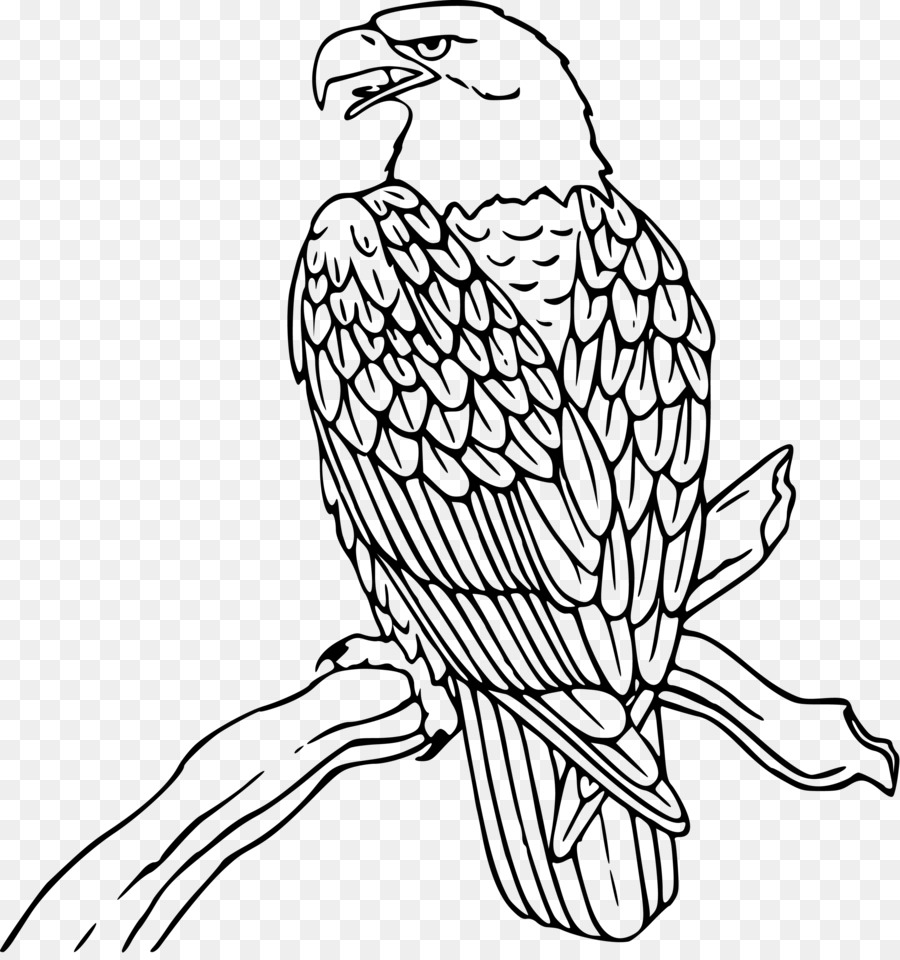 Bald Eagle Coloring Book Golden Clip Art