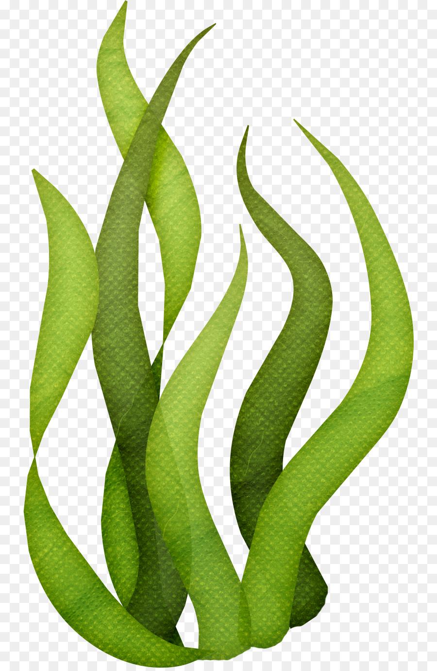 seaweed algae clip art ocean png download 804 1374 free rh kisspng com seaweed clip art free seaweed clip art black and white