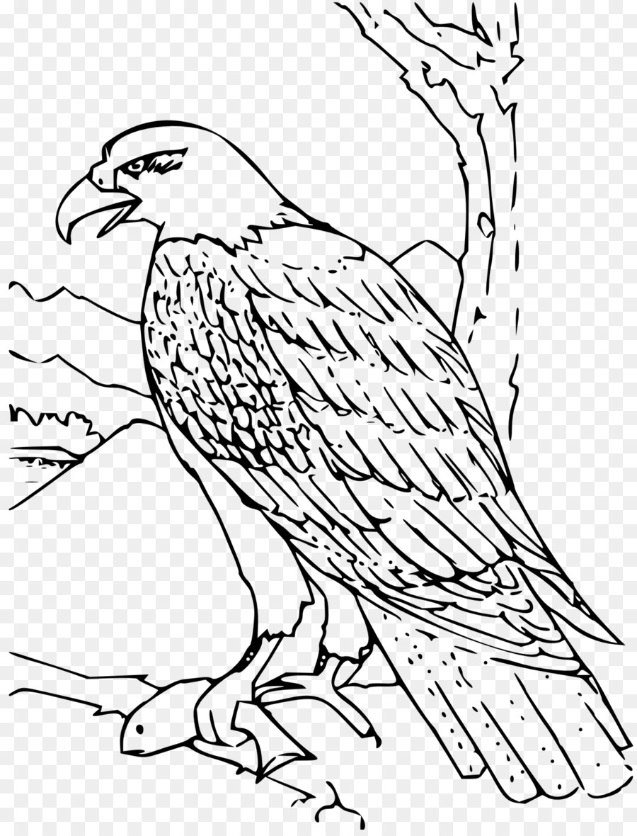 Bald Eagle Bird Coloring book Harpy Eagle - colouring png download ...