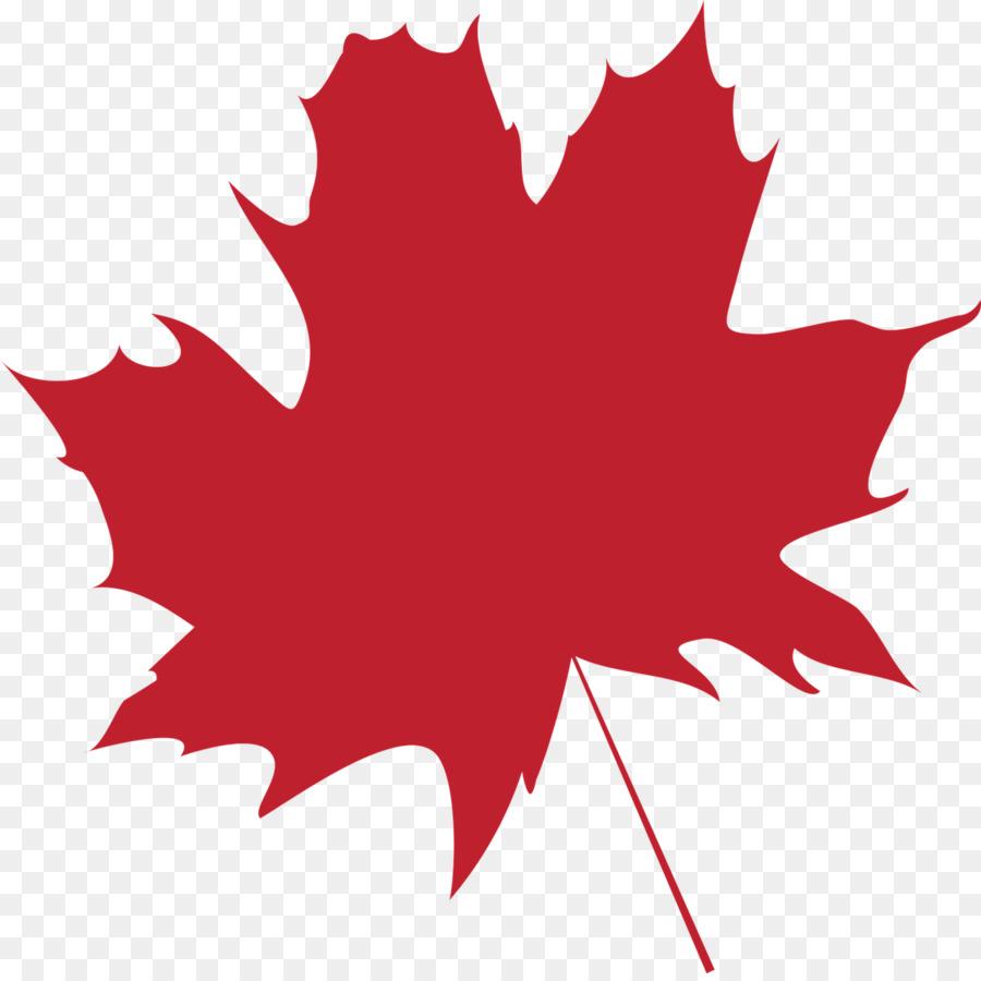 Maple leaf Flag of Canada Color - folha png download - 1280*1270 ...