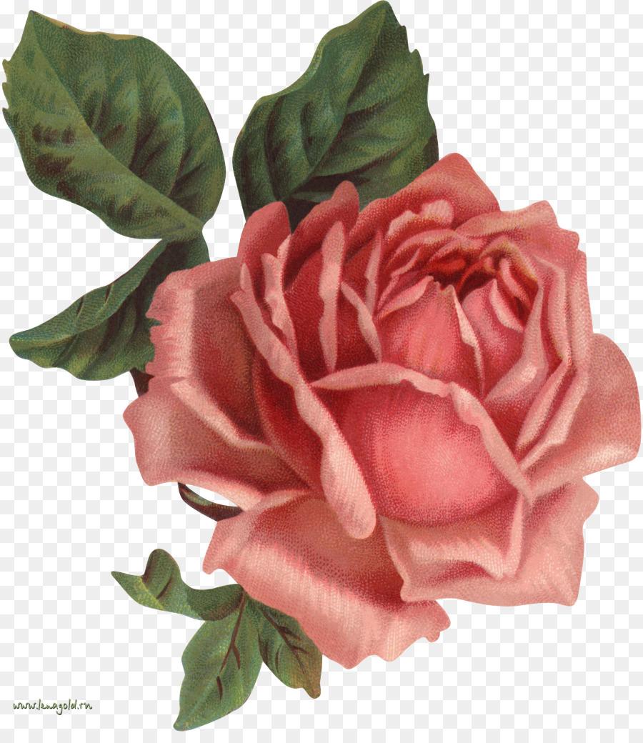 Old Roses The Master List Vintage Clothing Flower Clip Art Lotus