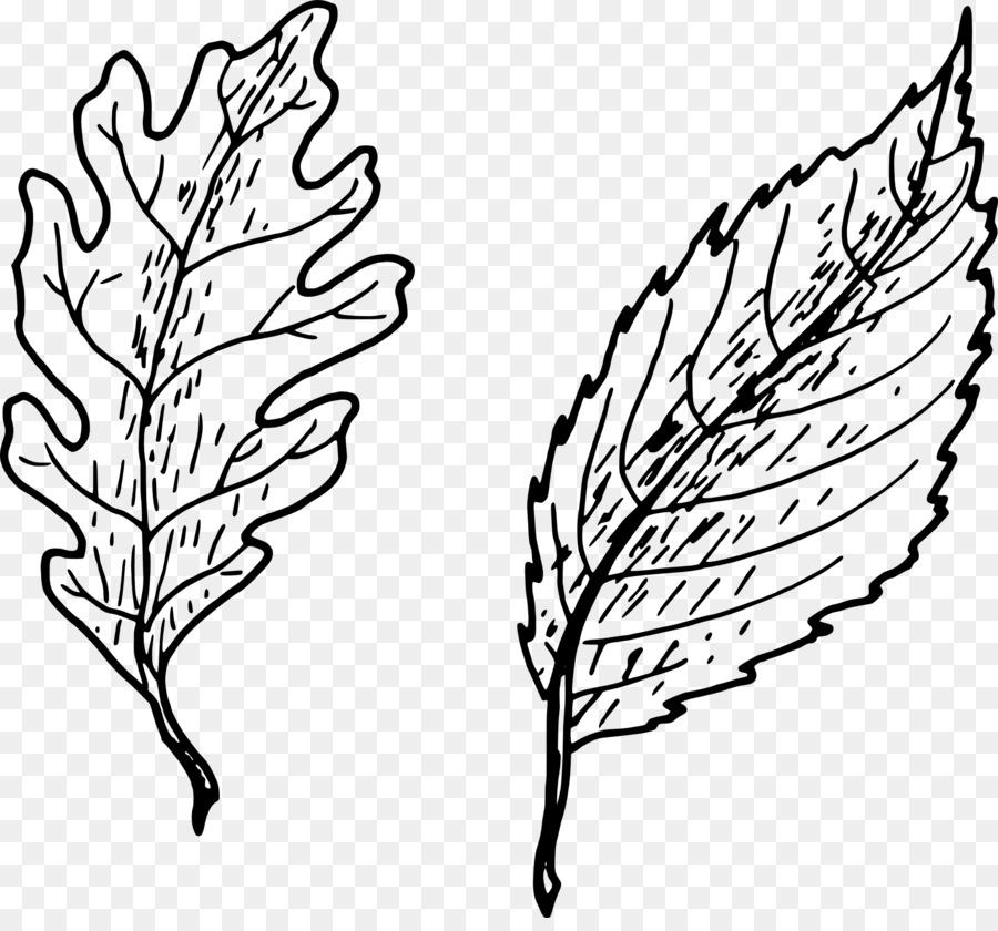 Drawing Leaf Clip Art