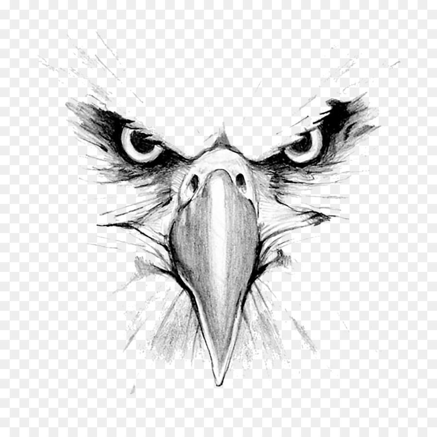 Águila calva Dibujo Hawk Mountain Sanctuary Golden eagle - águila ...