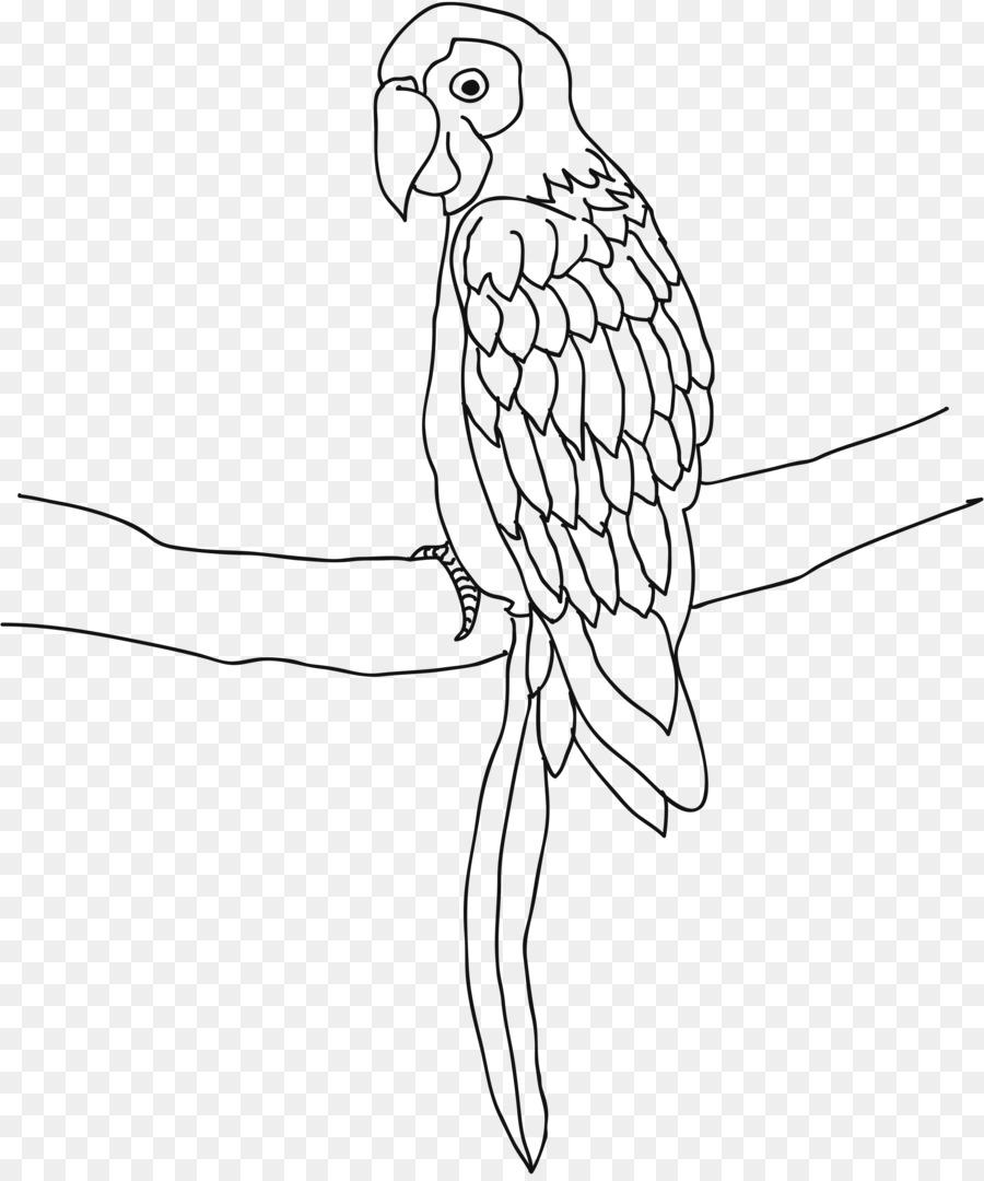 Loro Pájaro Cacatúa Dibujo para Colorear libro - loro png dibujo ...