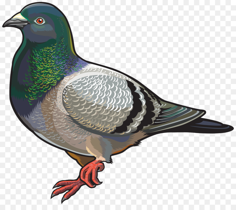 Paloma nacional Columbidae Clip art - aves Formatos De Archivo De ...