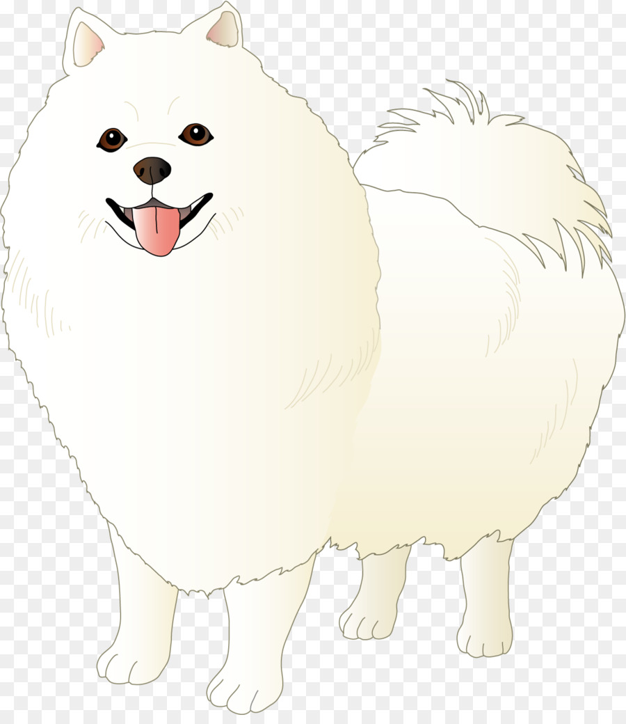 Japanese Spitz German Spitz Klein Volpino Italiano Pomeranian Dog