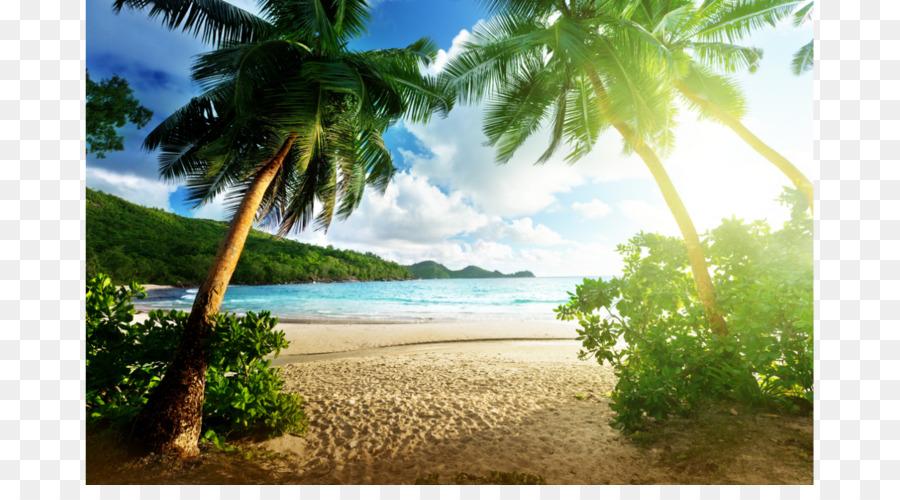 Beach Hut Desktop Wallpaper Palm High Definition Television