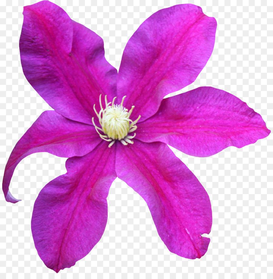 Pink flower magenta violet lilac tulip png download 886901 pink flower magenta violet lilac tulip mightylinksfo