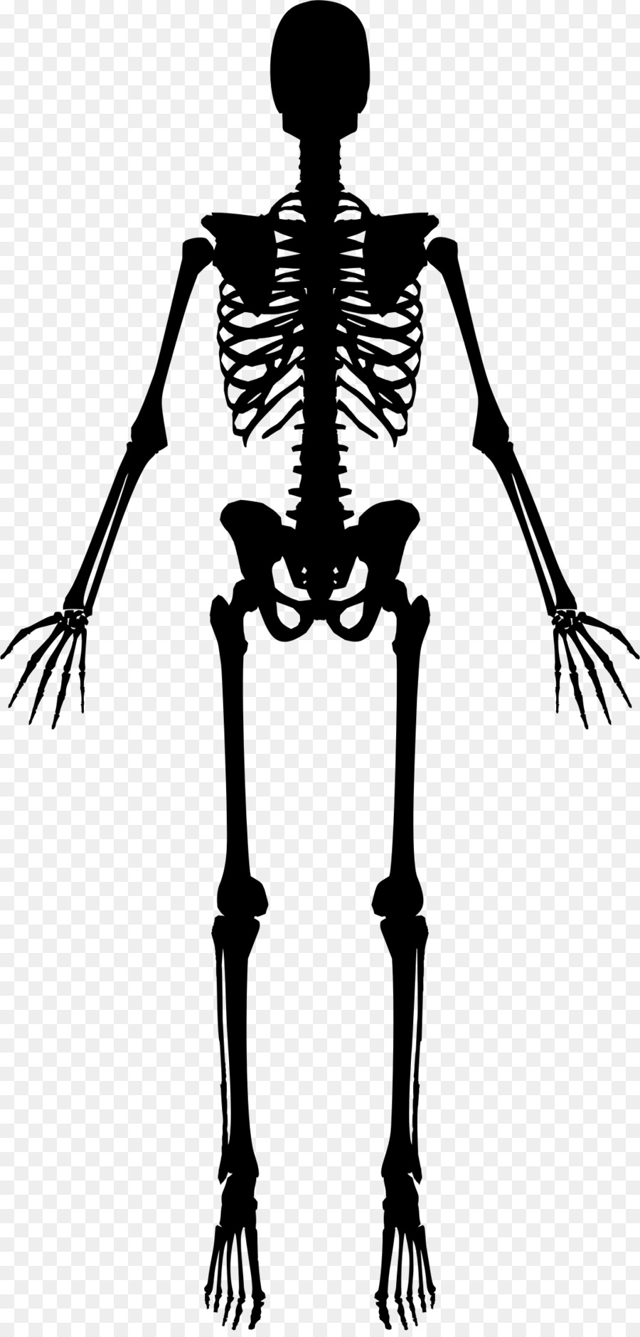 The Human Skeleton Clip Art Human Torch Png Download 10842254